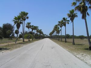 Road in Florida with palm trees.