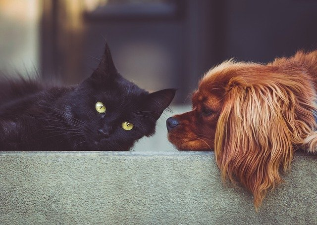 Your pets will feel calm if you are calm as well.