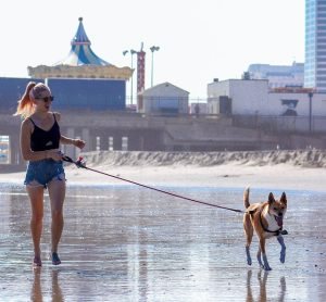 Have fun at the beach with your dog.