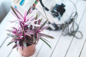Top 5 gift ideas for first-time homeowners - indoor plant