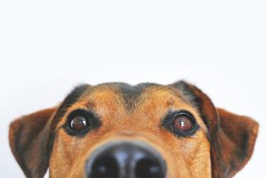 You will need to find alternative methods of moving your pets during your relocation