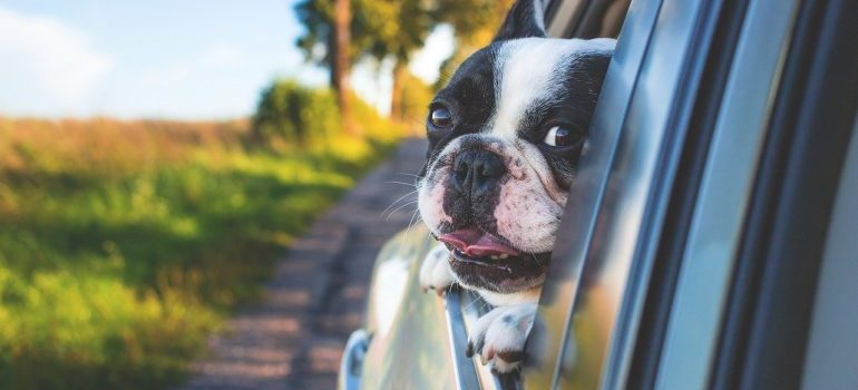 All moving tips for pet-owners include planning.