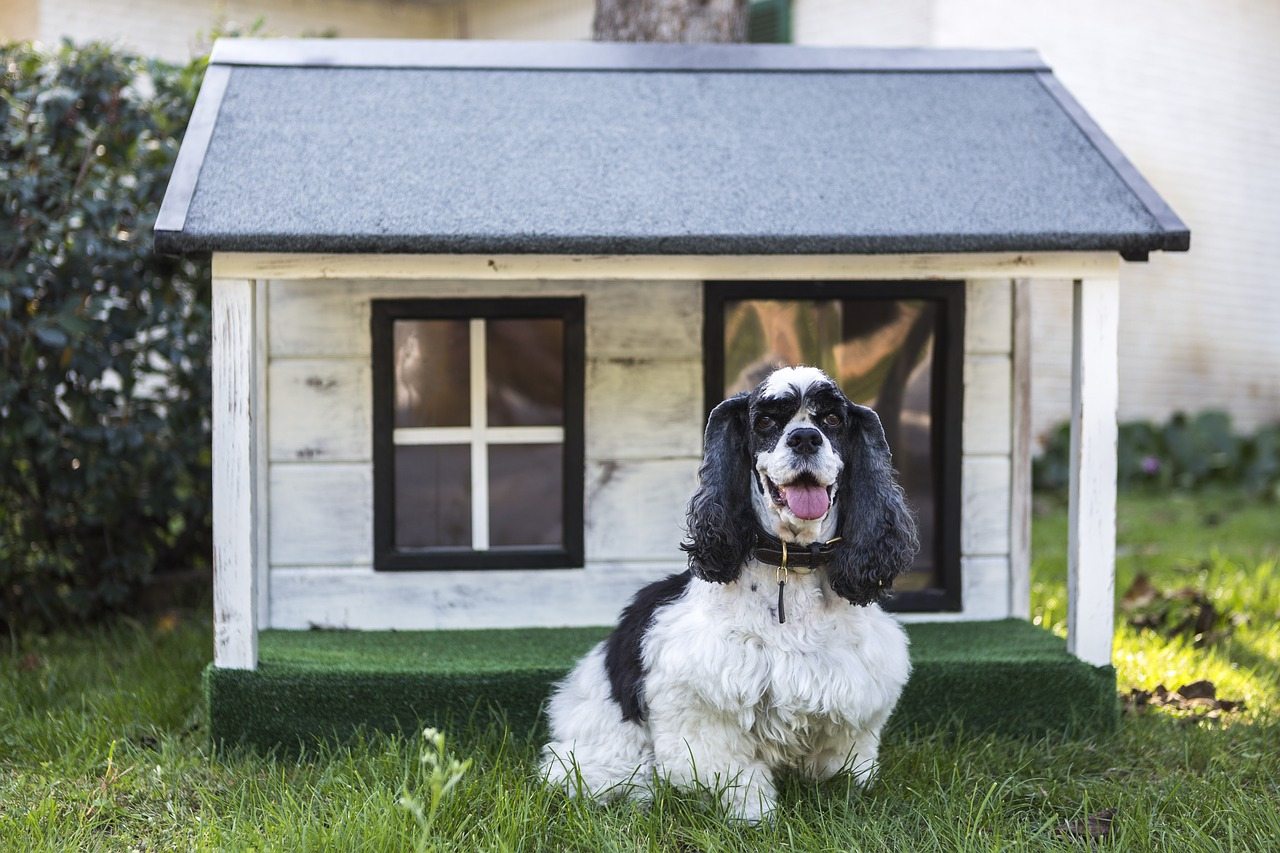 There are many useful moving tips for pet-owners